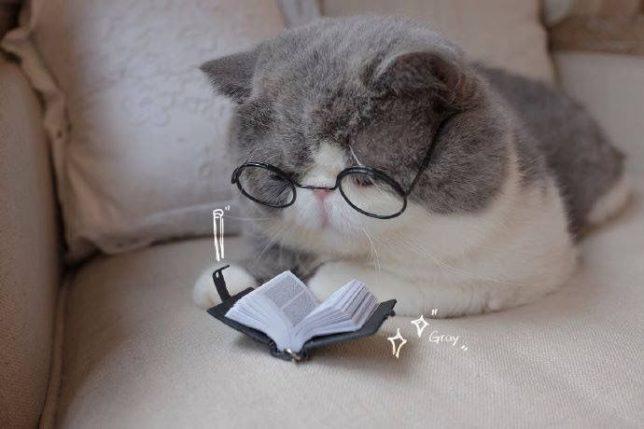 Cat Pinterest 03