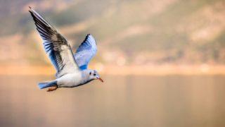 FlyingBird Steemit
